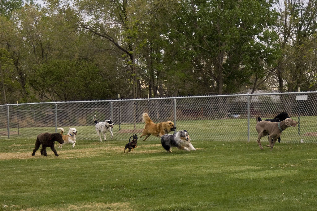 Roanoke area Dog Parks