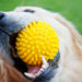 Exercise Your Pup With These Fun Activities