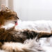 Easy Ways To Control Pet Hair In Your Home