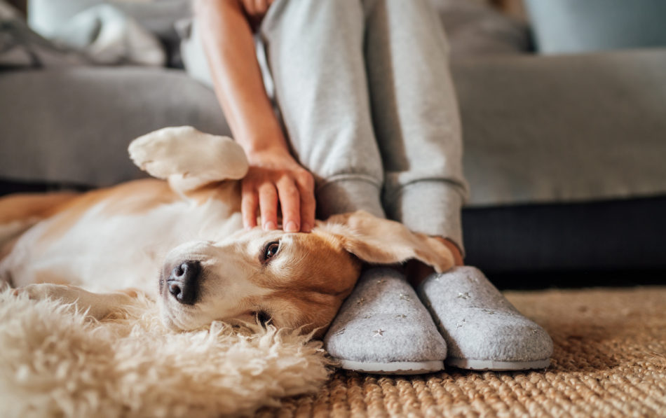 Dog laying on the floor next to owner