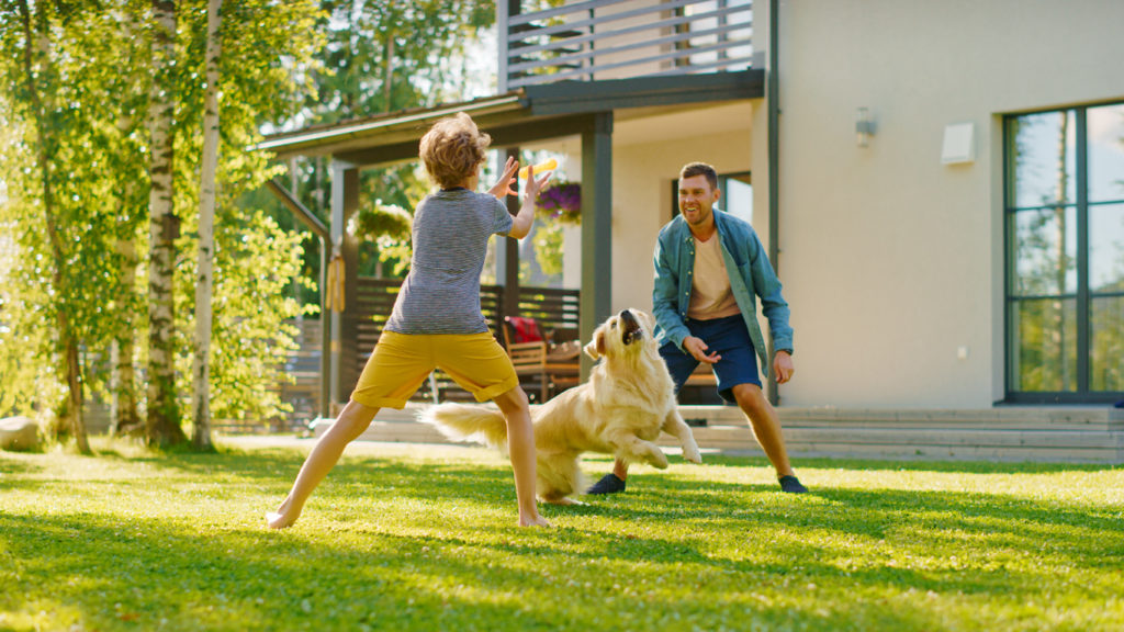 Handsome Father and Son Play Catch With Loyal Family Friend Golden Retriever Dog. Family Spending Time Together Training Dog. Sunny Day Idyllic Suburban Home Backyard.