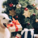 Spoil Your Furry Friend With These Gift Ideas