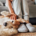 Check Out These Helpful Tips For Cleaning Up Pet Hair
