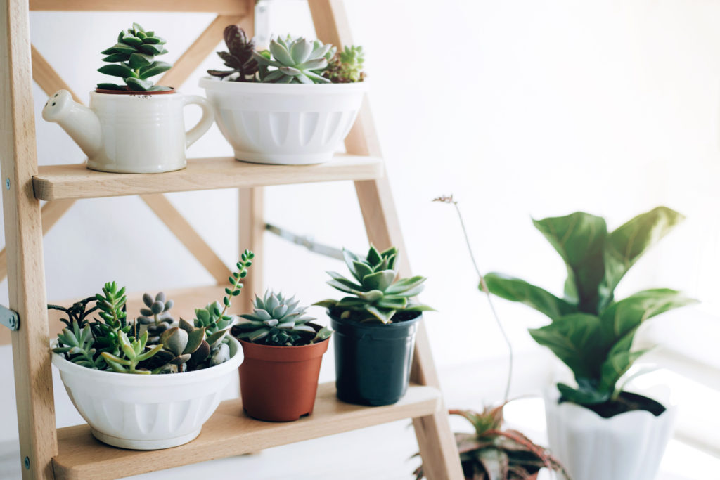 Wooden folding ladder used as shelves for plants in natural dining room interior with white walls.
